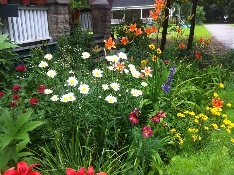 Image result for beautiful perennial gardens