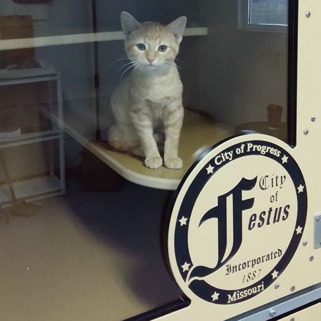 The City of Festus, Missouri purchased a couple Cat-Hotel units as part of the animal control for the town.  Since installing these cat-hotel units, the City of Festus has seen an increase in cat adoption-rates!