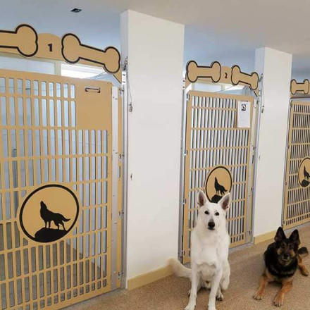 how to keep a dog kennel clean