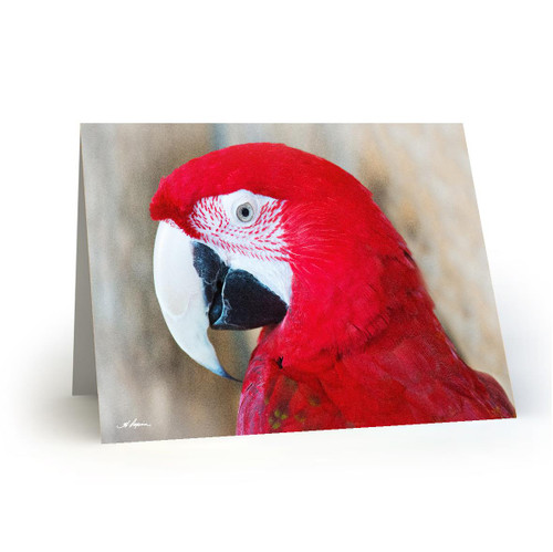 Parrot 3 - HP100