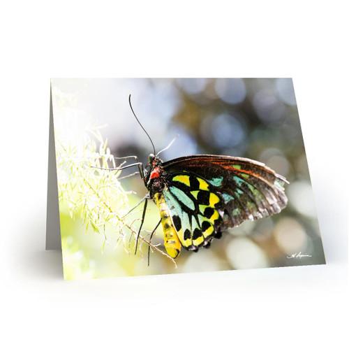 Butterfly 1 - HP100