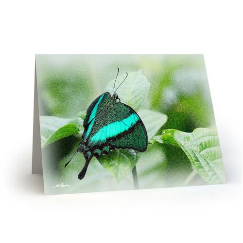 Butterfly 2 - HP100