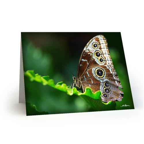Butterfly 5 - HP100