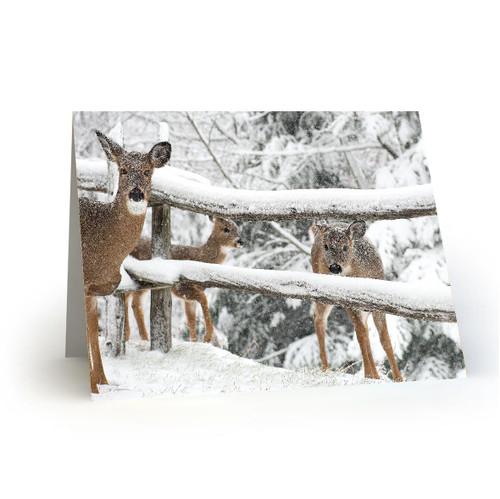 Deer 1 - HP100