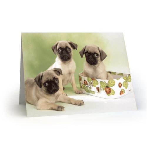 3 Mops dogs