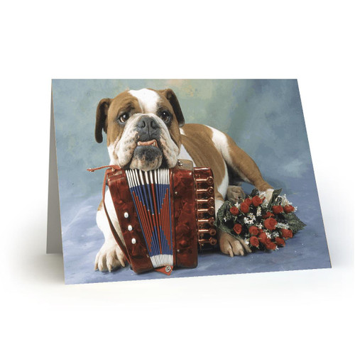 Accordeon Dog