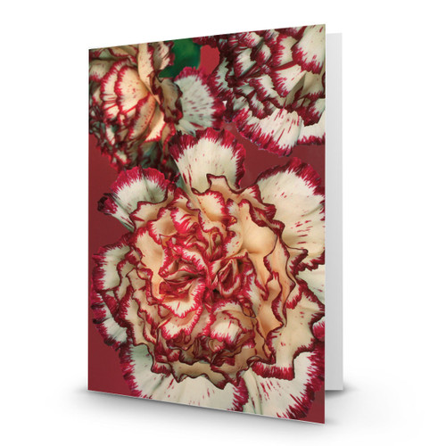 3 Carnations - MT100