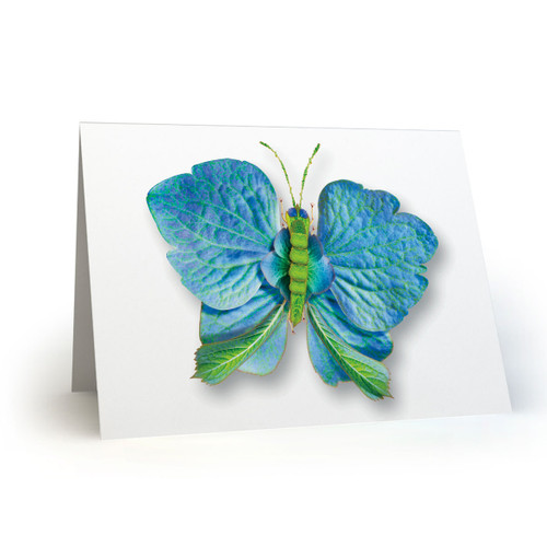 Butterflies 02 - MT100