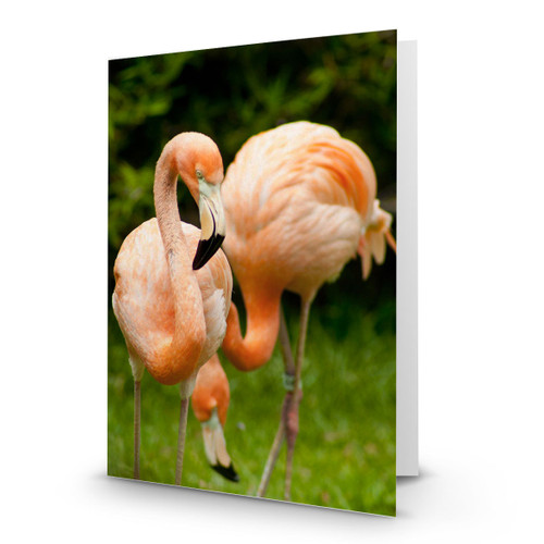 Animals Flamingo Pair - CC100