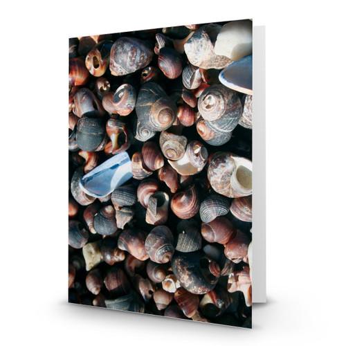 Background Snail Shells - CC100