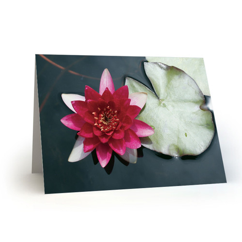 Pink Water Lily with Lily Pad - CC100