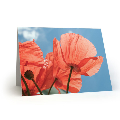 Red Poppies Underside with Blue Sky - CC100