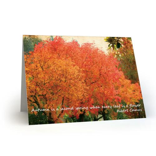 Autumn Colors - CB100
