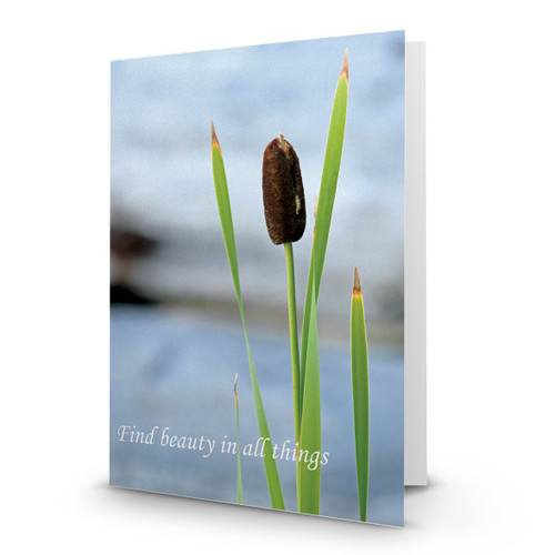 Find Beauty - CB100