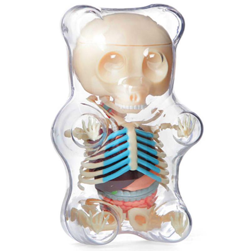 Gummi Bear Anatomy : Clear