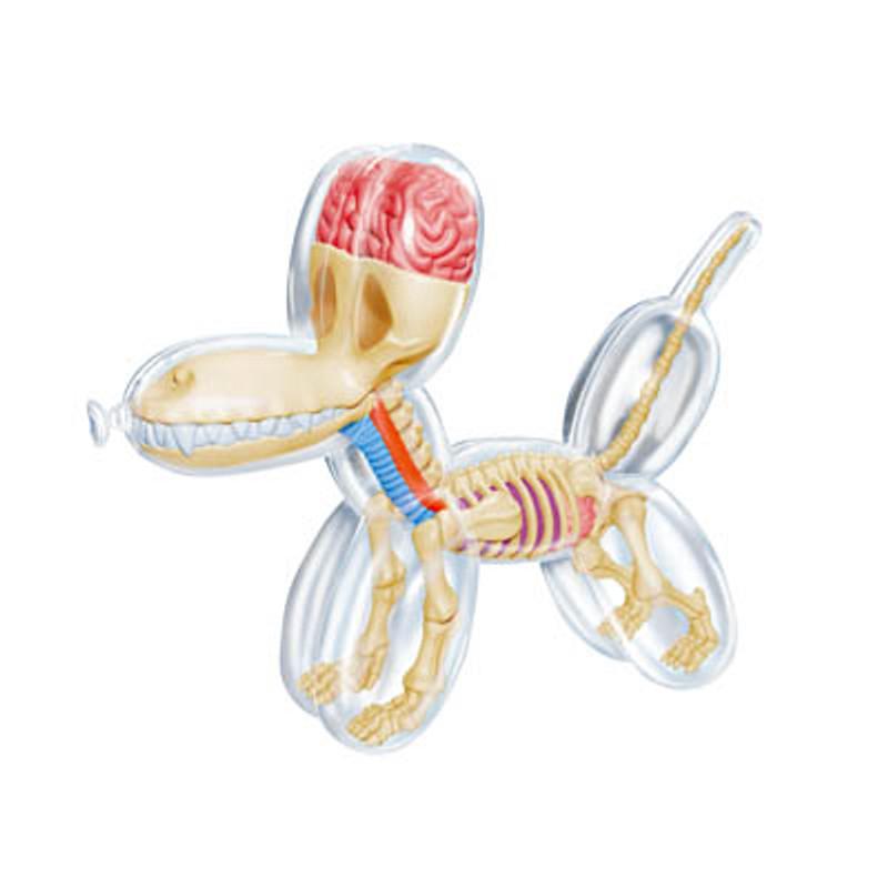 Mini Balloon Dog Anatomy : Clear