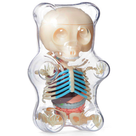Gummi Bear Anatomy Clear Myplasticheart