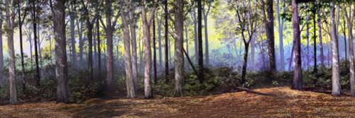 Hudson Allen Studios HA2102 - Eastern Woodland Scene Backdrop No.1