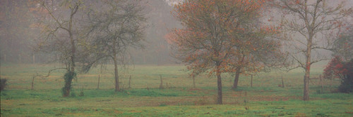 """Images Of The Land® ShelfScapes #1345 Foggy Morning 10"""" x 30"""" Scenic Backdrop"""