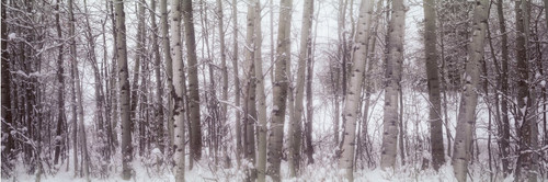 """Images Of The Land® ShelfScapes #716 Trees In Winter 10"""" x 30"""" Scenic Backdrop"""