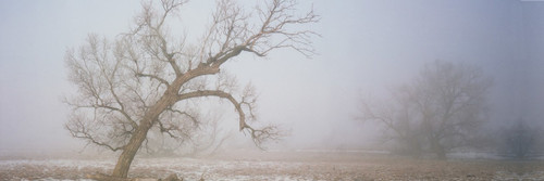 """Images Of The Land® ShelfScapes #812 Foggy Winter Morn 10"""" x 30"""" Scenic Backdrop"""