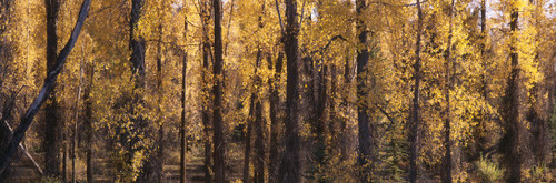 """Images Of The Land® ShelfScapes #1101 Forest #1 10"""" x 30"""" Backdrop"""
