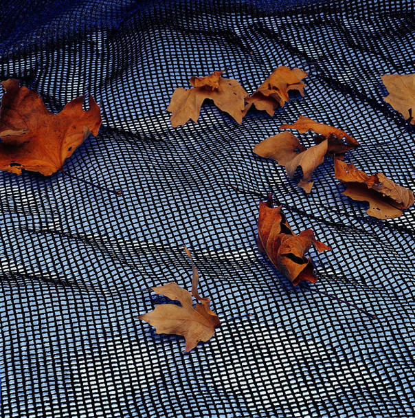 Leaf Net