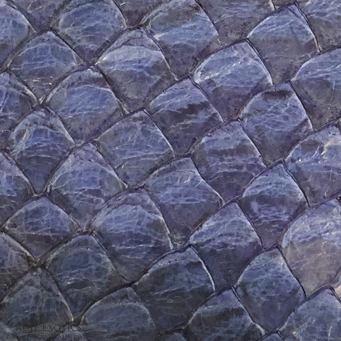 Pirarucu ( Arapaima)  Blue Matte -  XL