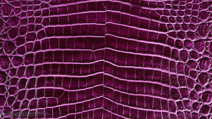 Nile Crocodile Belly -  Purple Two Tone