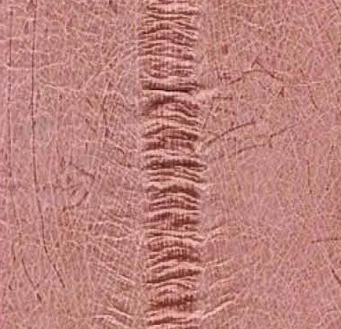 Genuine Eel Skin Panel - Pink