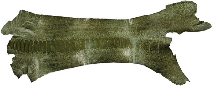 Genuine Ostrich Leg - Glazed Finish in Olive
