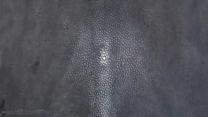 Stingray - Black Shagreen - Sanded & Polished