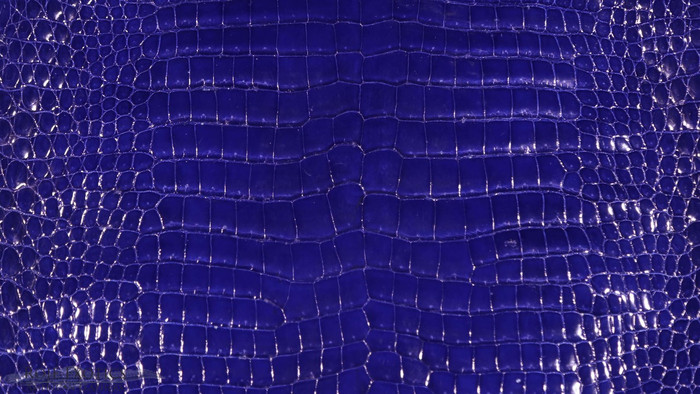 "Salt Water Crocodile - ""Classic"" Glazed - Royal Blue"