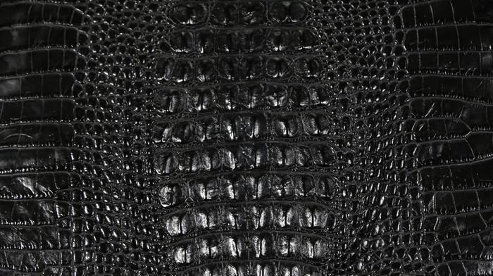 American Alligator Hornback  - Black Waxy Millennium 40-44cm