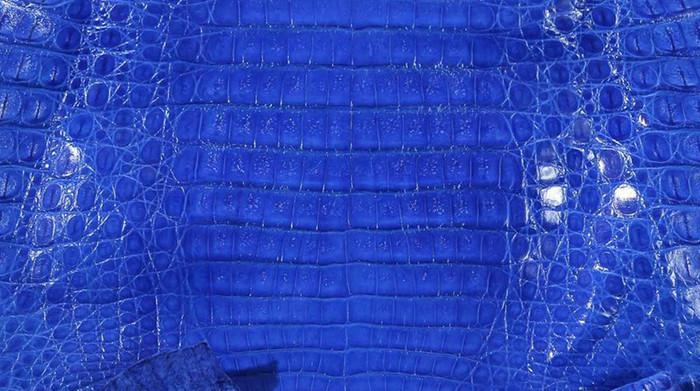 Caiman Belly Skin - Glazed - Electric Blue (38cm)