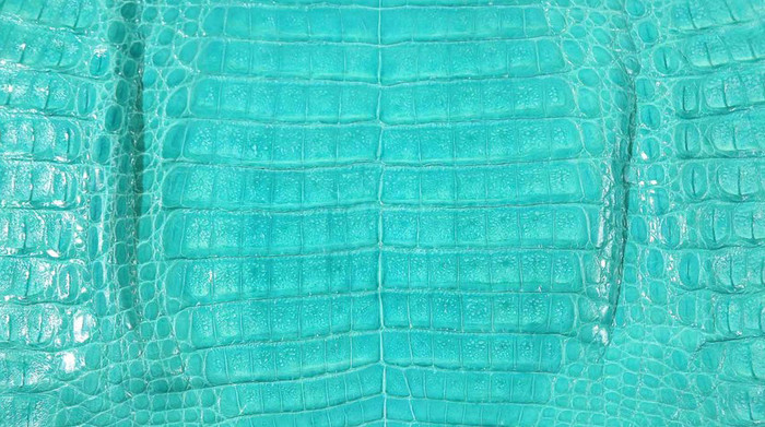 Caiman Belly Skin - Glazed - Turquoise (38 cm)