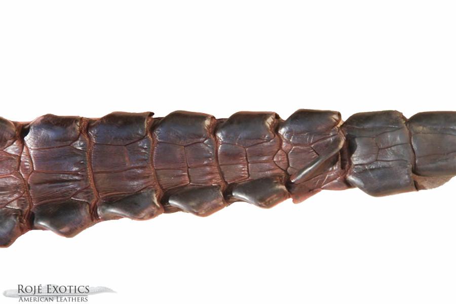 Nile Crocodile Backstrap  - Chocolate Brown