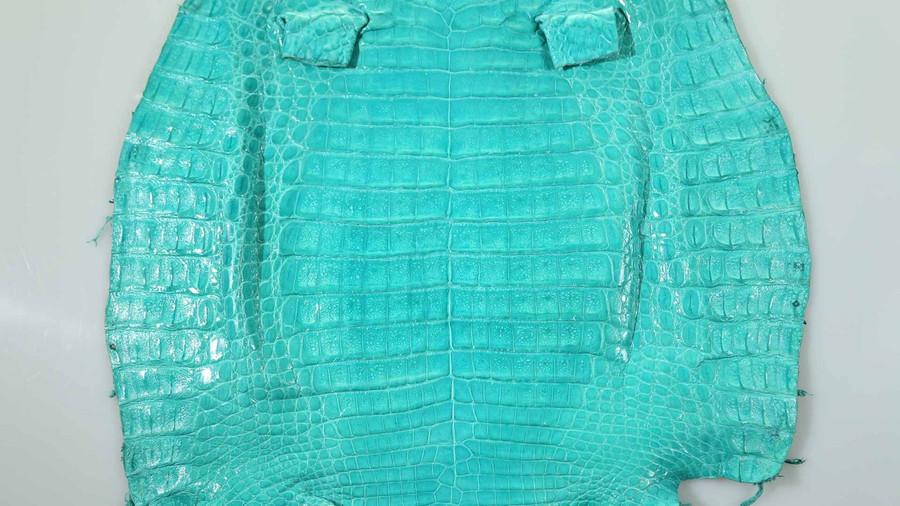 Caiman Belly Skin - Glazed - Turquoise (38 cm)