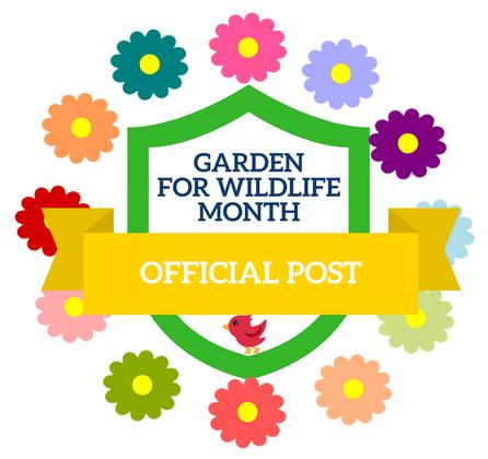 Learn How to Garden for Songbirds!   JCs Wildlife
