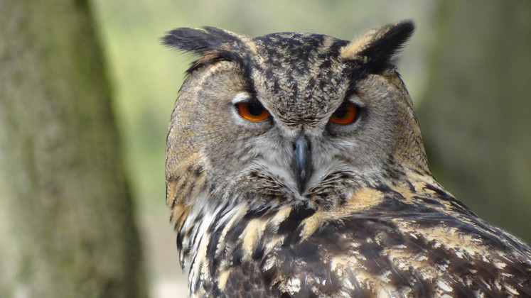 Tips for Bird Photography | JCs Wildlife