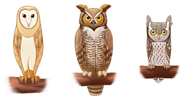 Is It an Owl? Or is it not an Owl? | JCs Wildlife