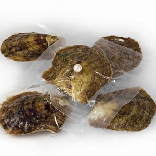 Set of 5 Vacuum Packed Oysters with Round Freshwater Pearls