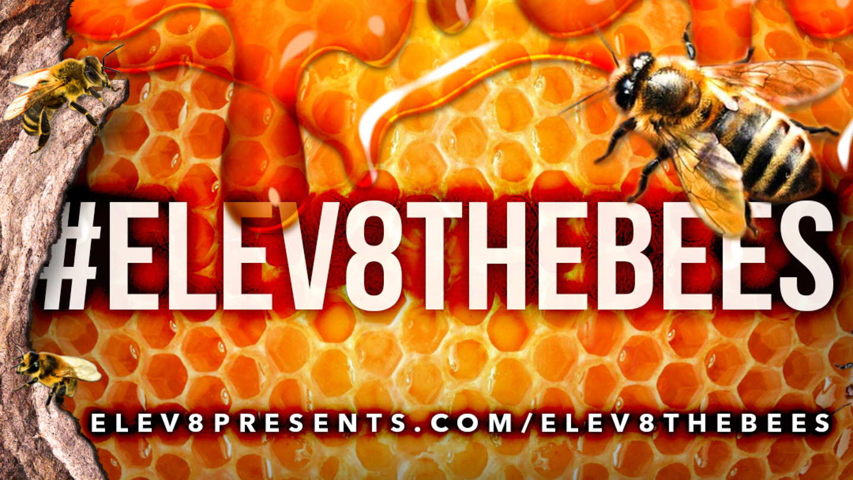 elev8thebees-newslettergraphic.jpg