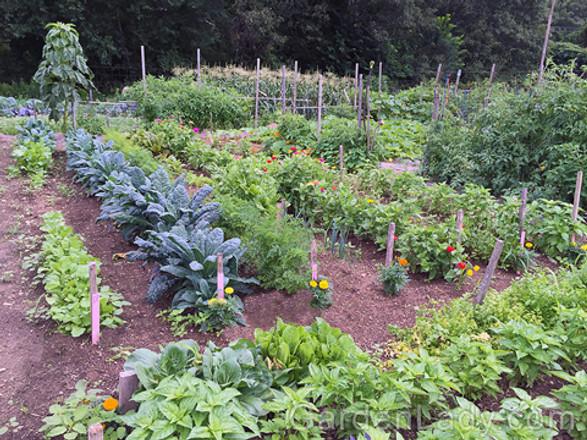 Veggie garden & Freezing