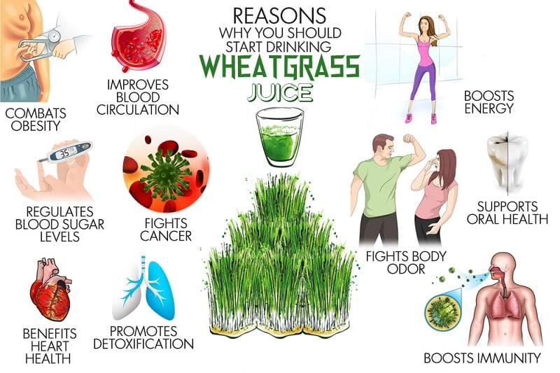 0-start-drinking-wheatgrass-j.jpg
