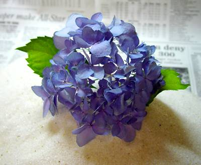 finished-product-drying-hydrangeas-compressor.jpg