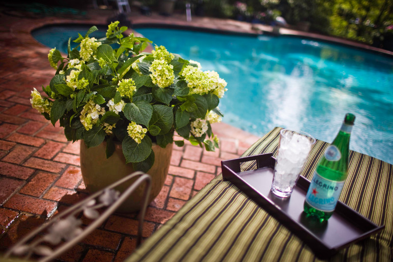 hydrangea-growing-next-to-lounger-by-the-pool-on-the-patio.jpg