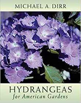 HYDRANGEAS A GARDENERS GUIDE