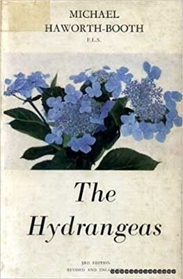 the-hydrangeas-by-micheal-haworth-booth-compressor-1-1.jpg