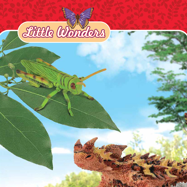 Collecta - Little Wonders